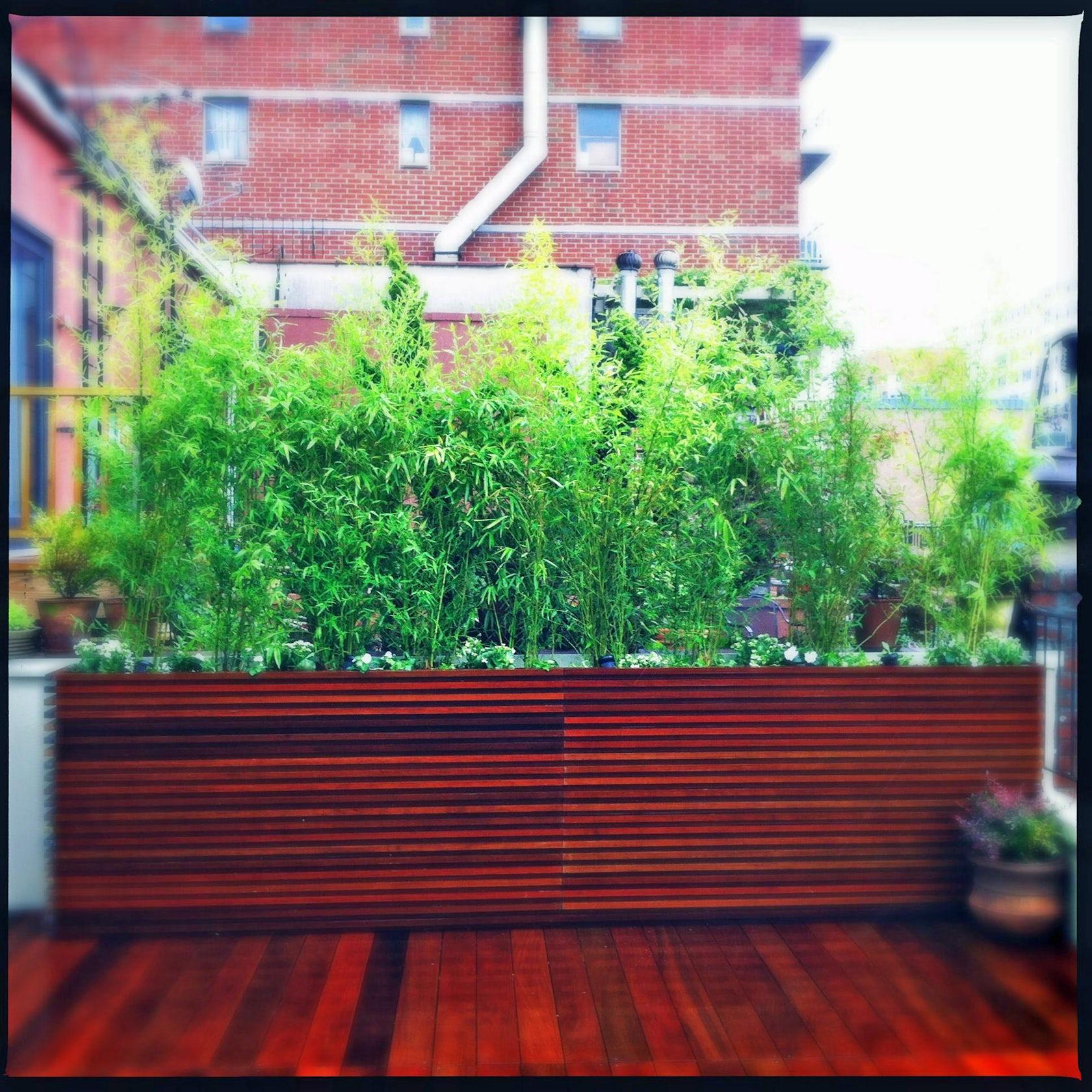 Bamboo Garden Ideas Planter Boxes