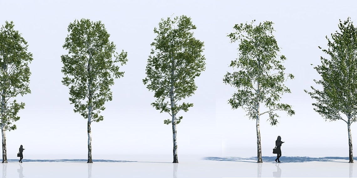 Free: 18 Highly Detailed 3D Trees for Your Architectural