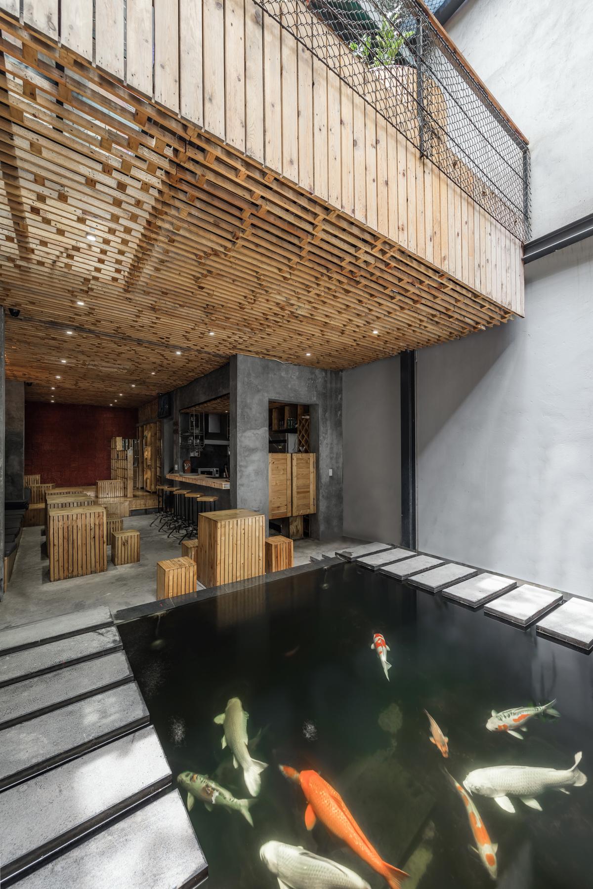 Koi fish in café aquarium